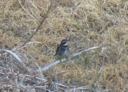 033 (3)鳥1.jpg