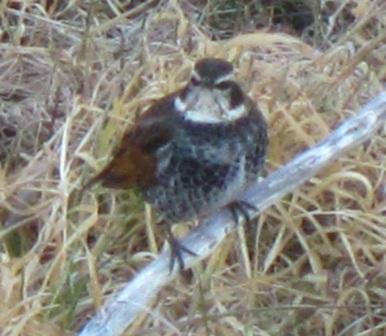 036 (2)鳥の3.jpg