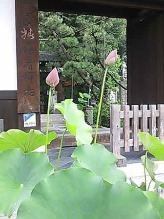 DSC_0464興禅寺はす.JPG