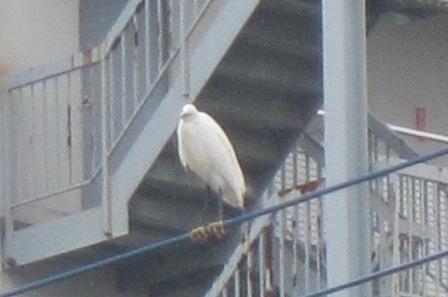 鳥3.jpg