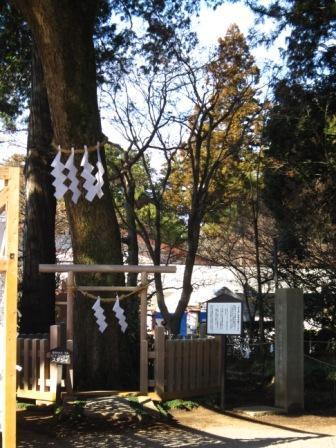 8樹.JPG